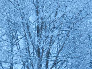 snow 036