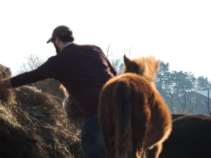 moving the horses to a different field.
